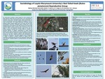 Sociobiology of Loyola Marymount University's Red-Tailed Hawk (Buteo jamaicensis) Reproductive Group