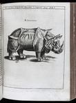 Illustration of a Rhinoceros by Albert Dürer from <em>Physica Curiosa</em>, 1667