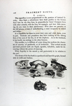 Page about the Physiognomy of Fish from <em>Essays on Physiognomy</em>, 1810